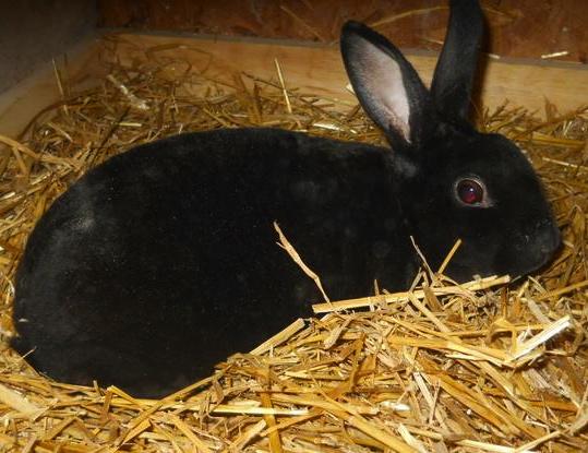 How Long Do Rabbits Live - Wild vs  Domestic
