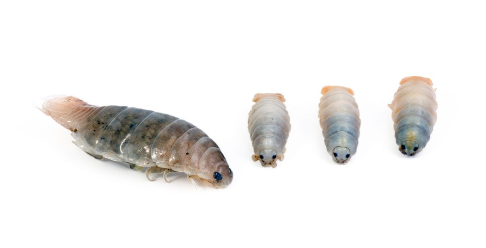 Sand Fleas Treatment - How To Stop The Bites