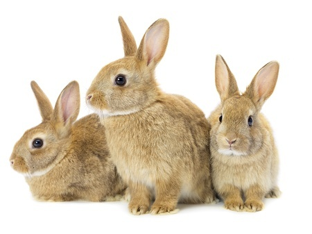 Facts About Rabbits - Wild And Domestic Behavior