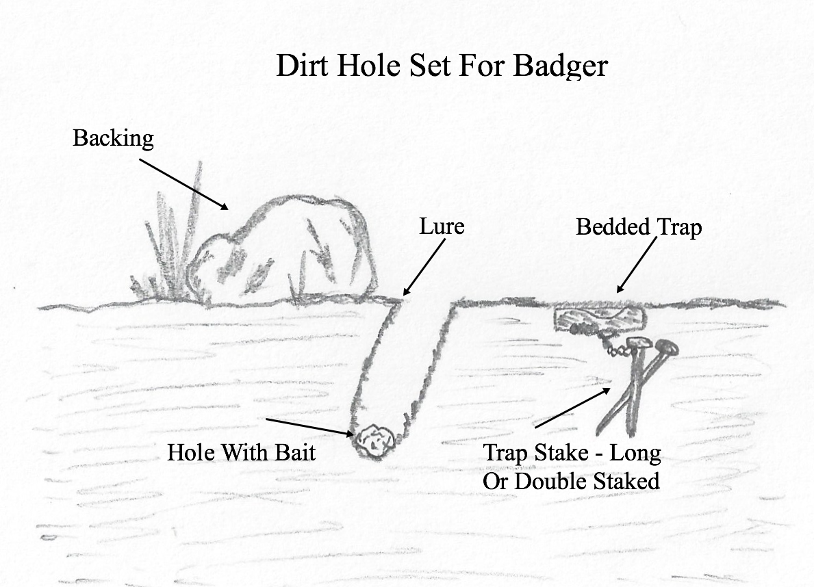 Trapping Badgers Best Sets And Bait