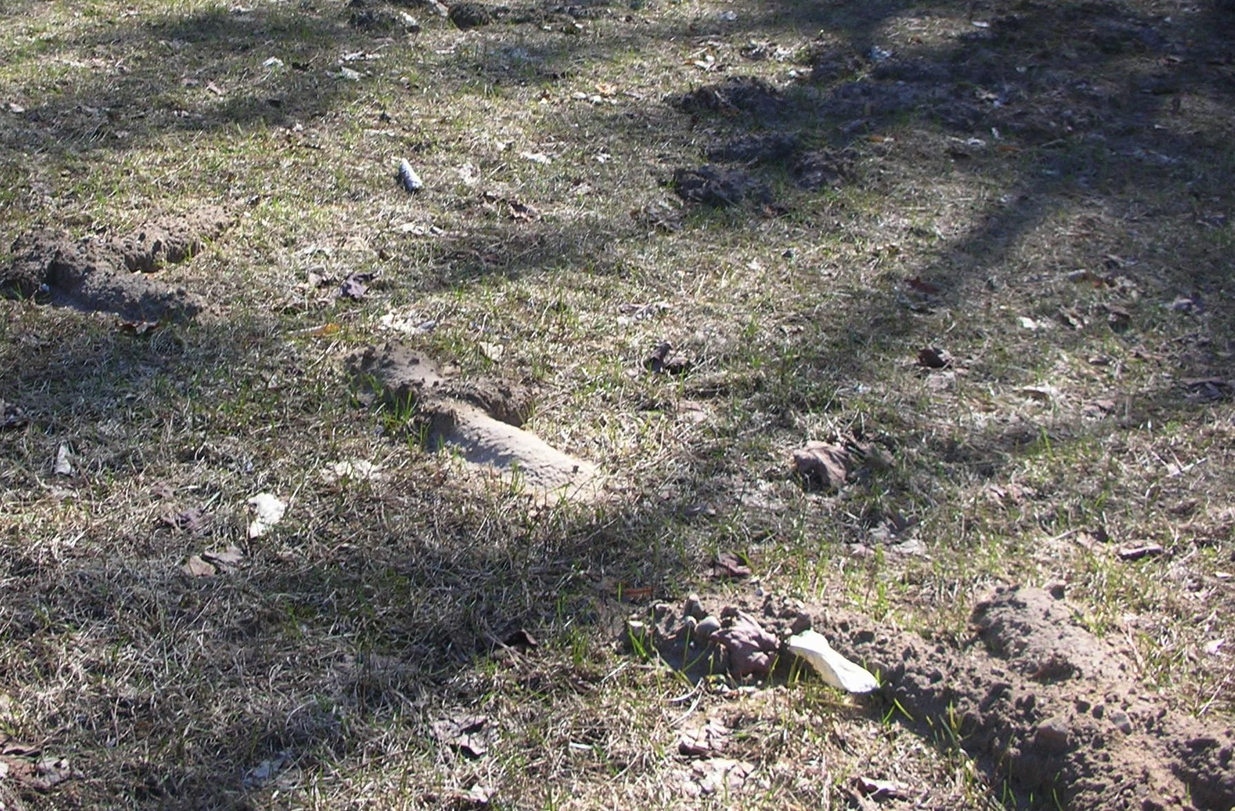 How to get rid of ground moles - Damage Caused By Moles