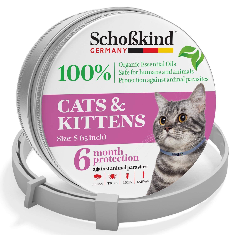 cat scratch disease symptoms