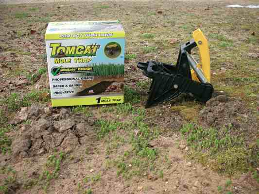 Tomcat Mole Trap Review Does It Work
