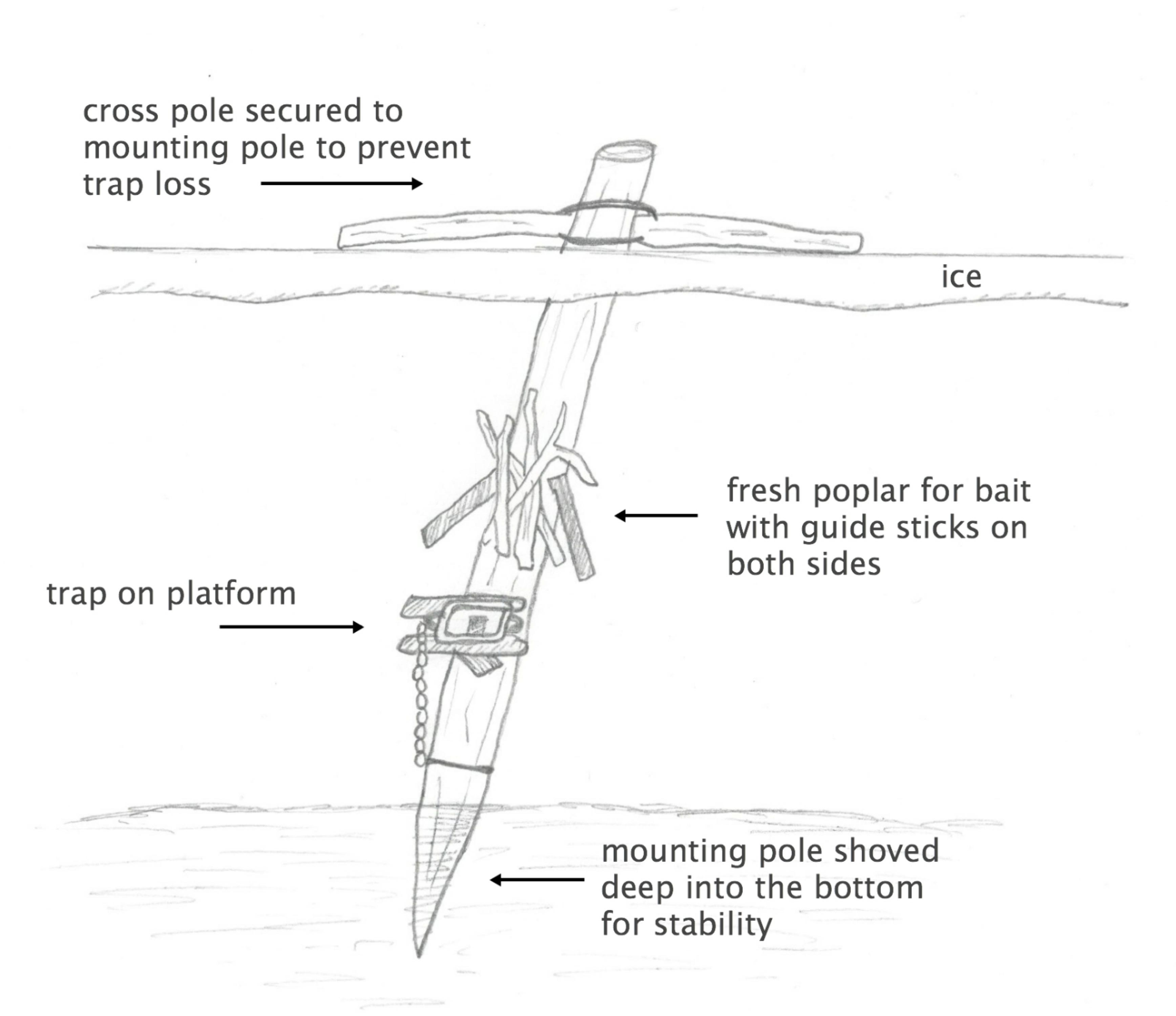 Diagram Of Beaver Body - Online Schematic Diagram •