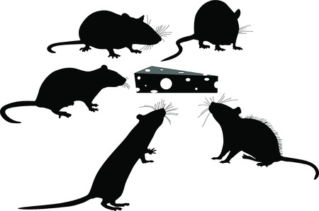 What Do Rats Eat - Effective Rodent Control